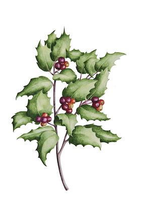 Hybrid Holly